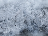 March17ICE2_0665A