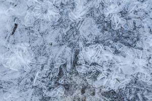 March17ICE_0861B
