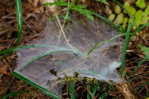 spidersoct16_114a